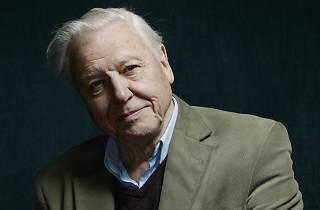 Sir David Attenborough profile image