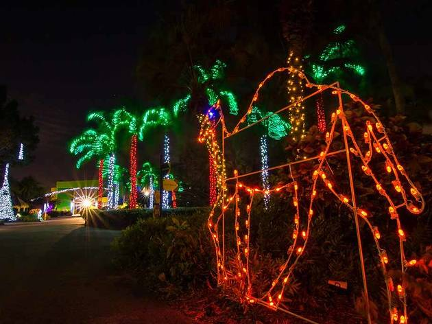 Where to see christmas lights in miami and fort lauderdale zoo lights solutioingenieria Images