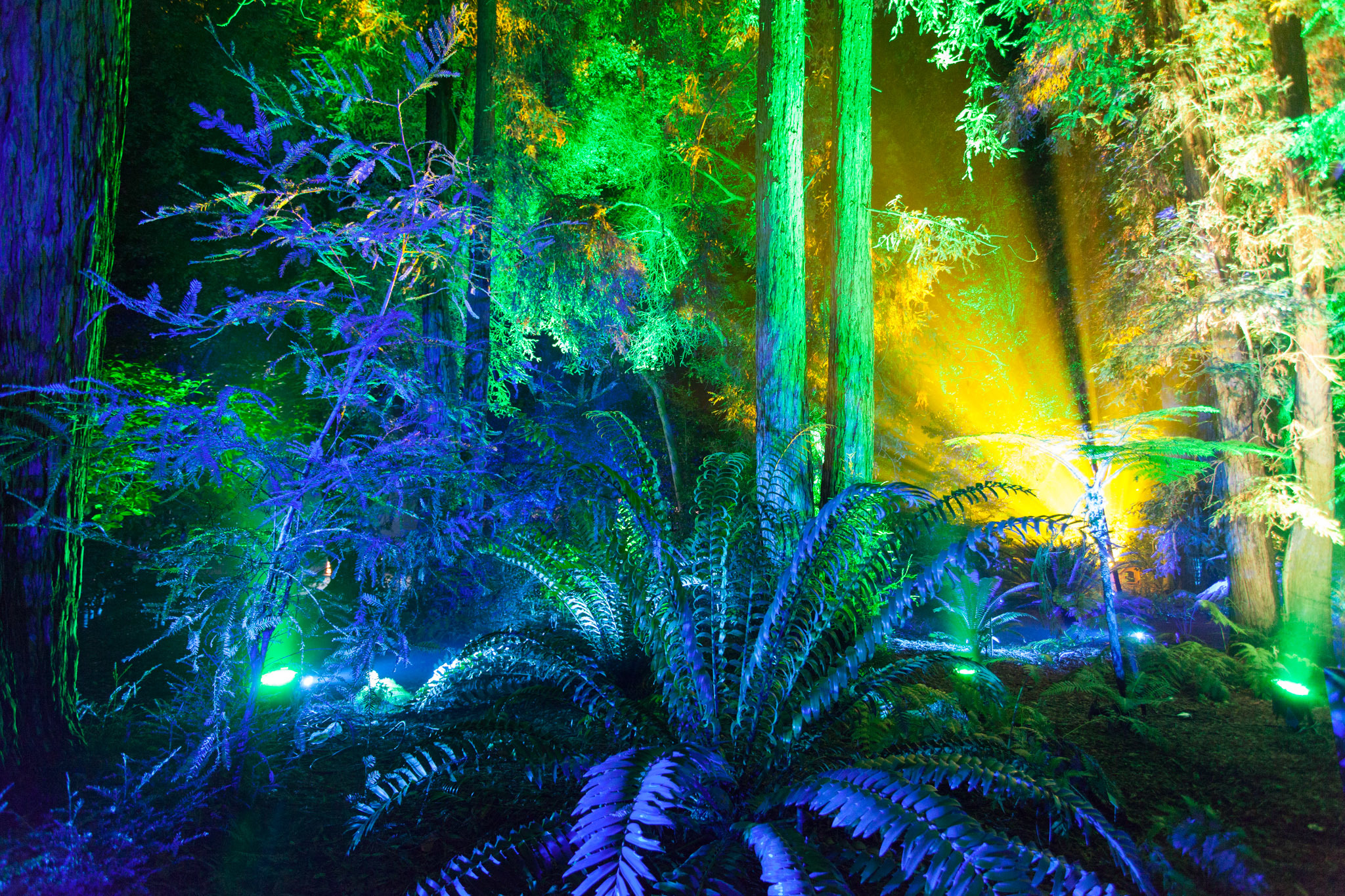 Enchanted Forest Of Light Brings L A S Most Stunning