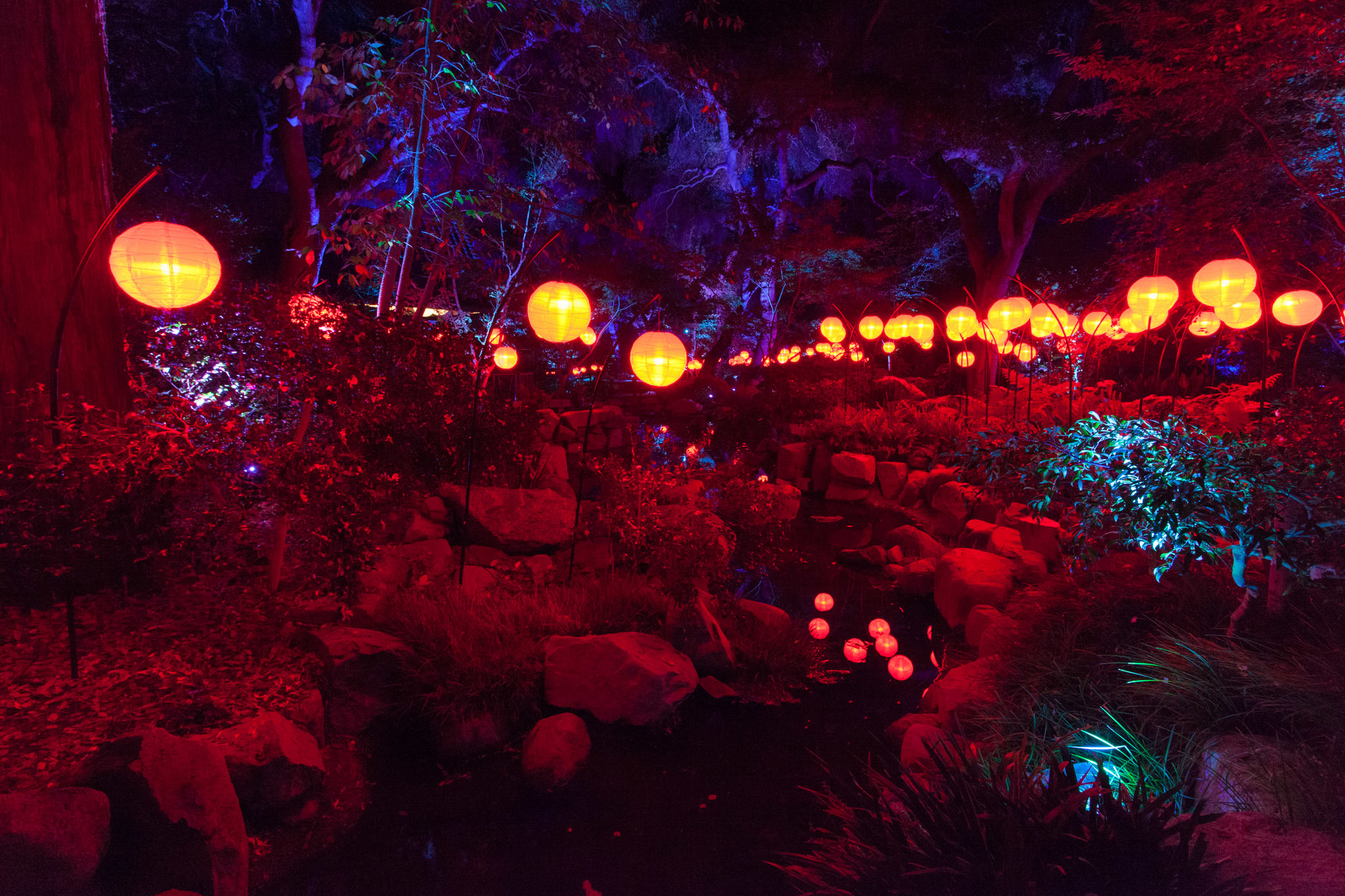 Enchanted Forest Of Light Brings L A 39 S Most Stunning