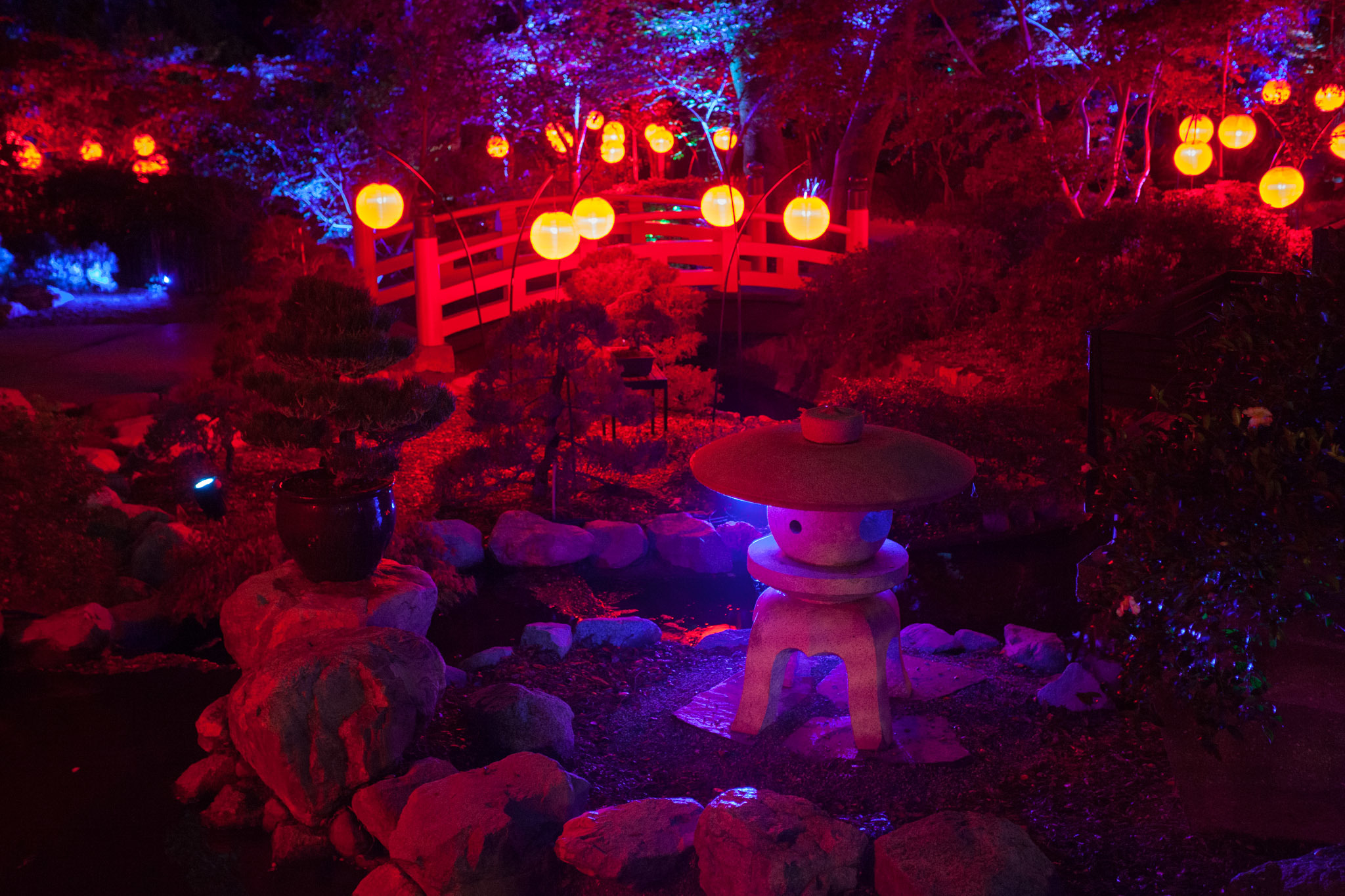 Enchanted Forest Of Light Things To Do In Los Angeles