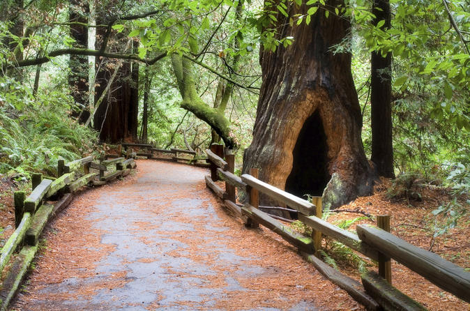 Discover Muir Woods and Northern Cal. Wine Country