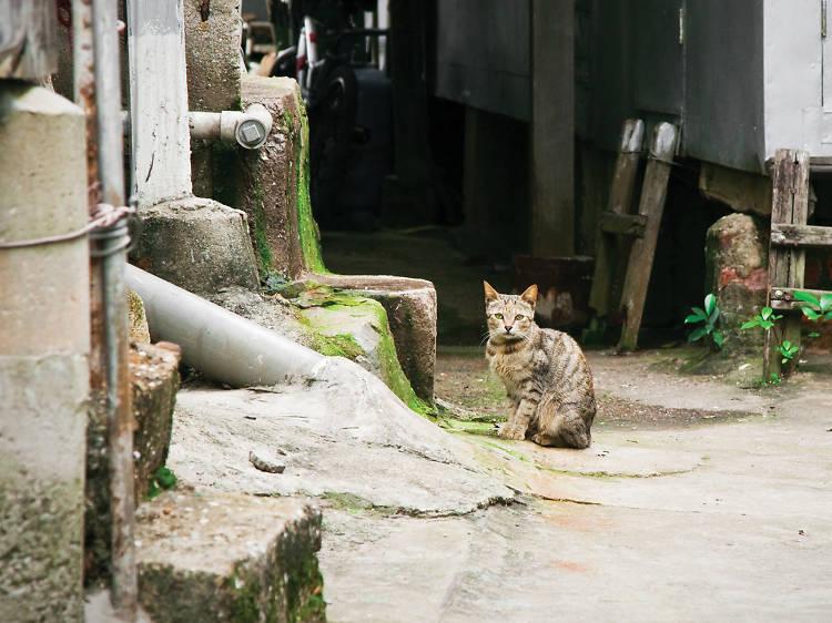 Hong Kong Alley Cat Watch
