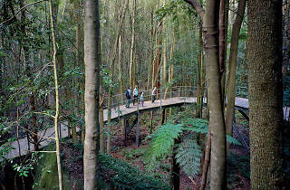 Scenic Walkway Katoomba