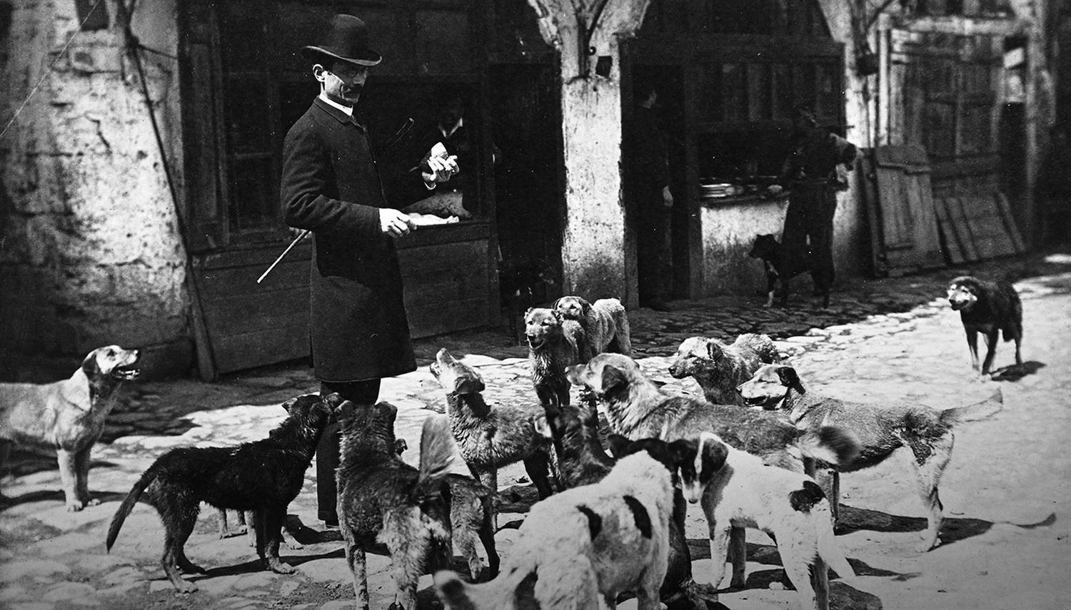 The Four-Legged Municipality: Street Dogs of Istanbul