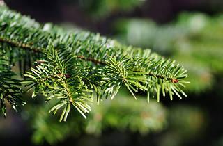Generic Christmas Tree 01