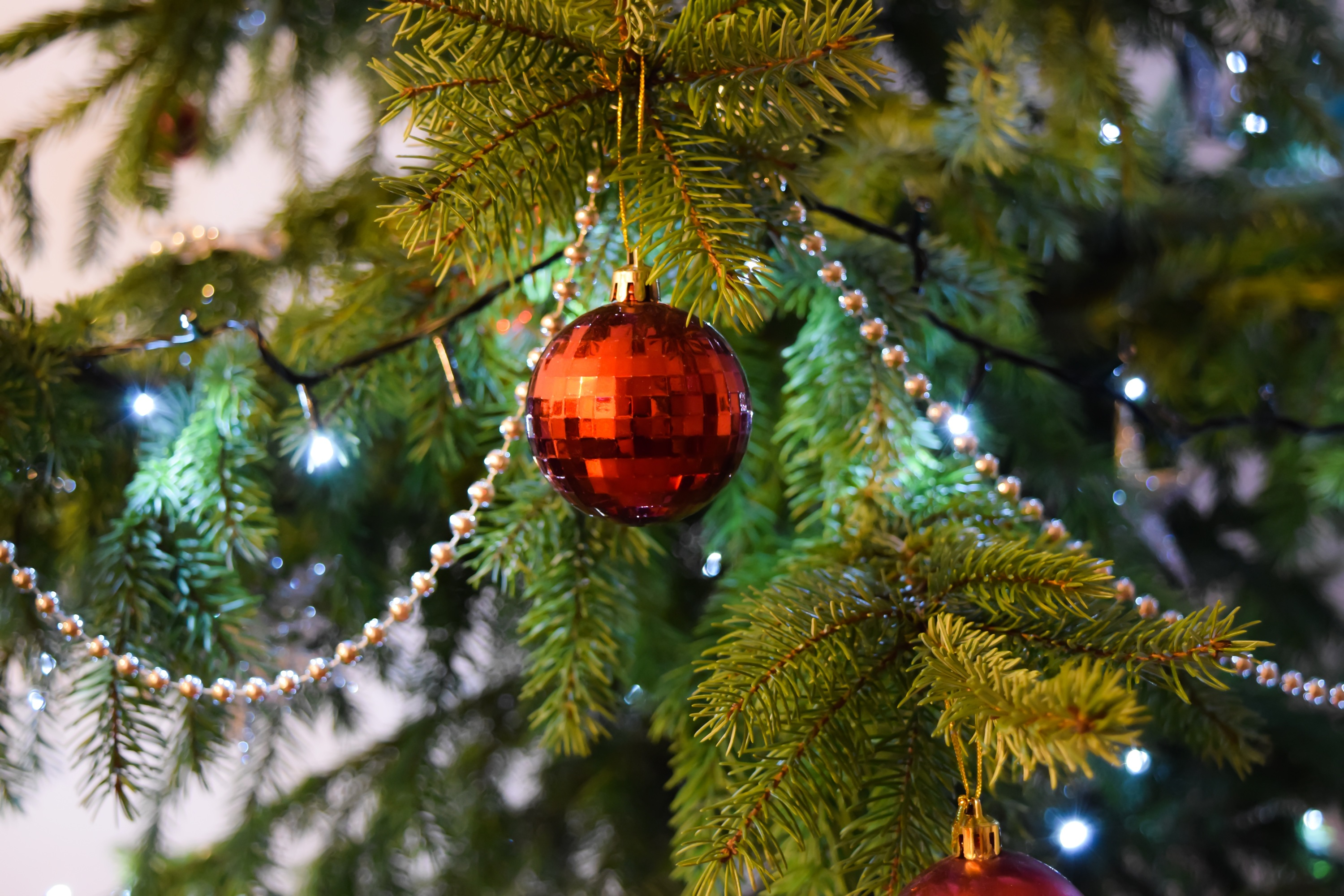 Where To Buy Christmas Trees In Melbourne Christmas Decorations