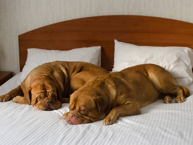 Check out the best pet-friendly hotels in NYC
