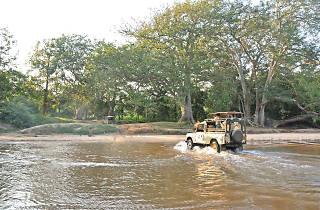 Safari to Yala