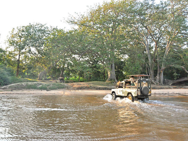 A safari to Yala