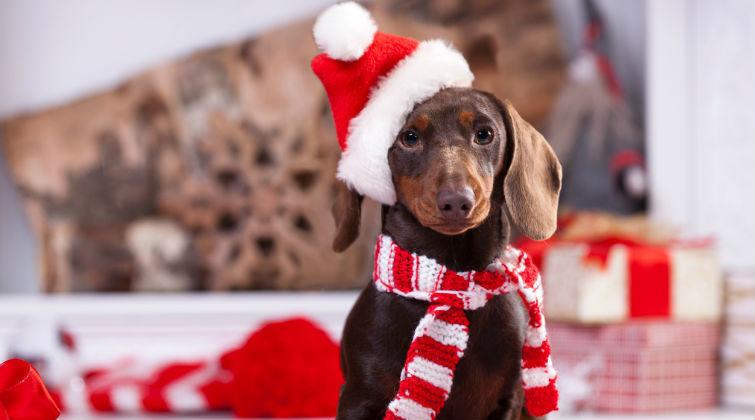 Santa Claus en Smart Dogs