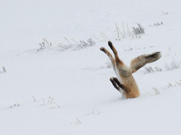Vidéo gag chez les animaux : le palmarès des Comedy Wildlife Photography Awards