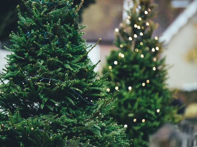 Where to buy a real Christmas tree in Melbourne