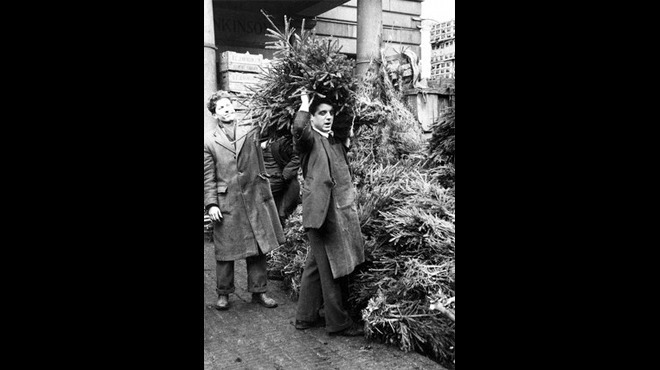 Christmas trees in Covent Garden Market, 1952