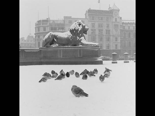 Lion statue and pigeons in Trafalgar Square, 1957