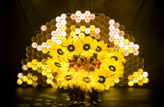 Hot Brown Honey 9 (Photograph: Anna Kucera)