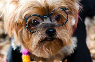 Perro Harry Potter