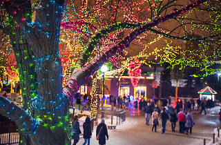 Christmas In Chicago 2019 Guide Including Festive Things To Do