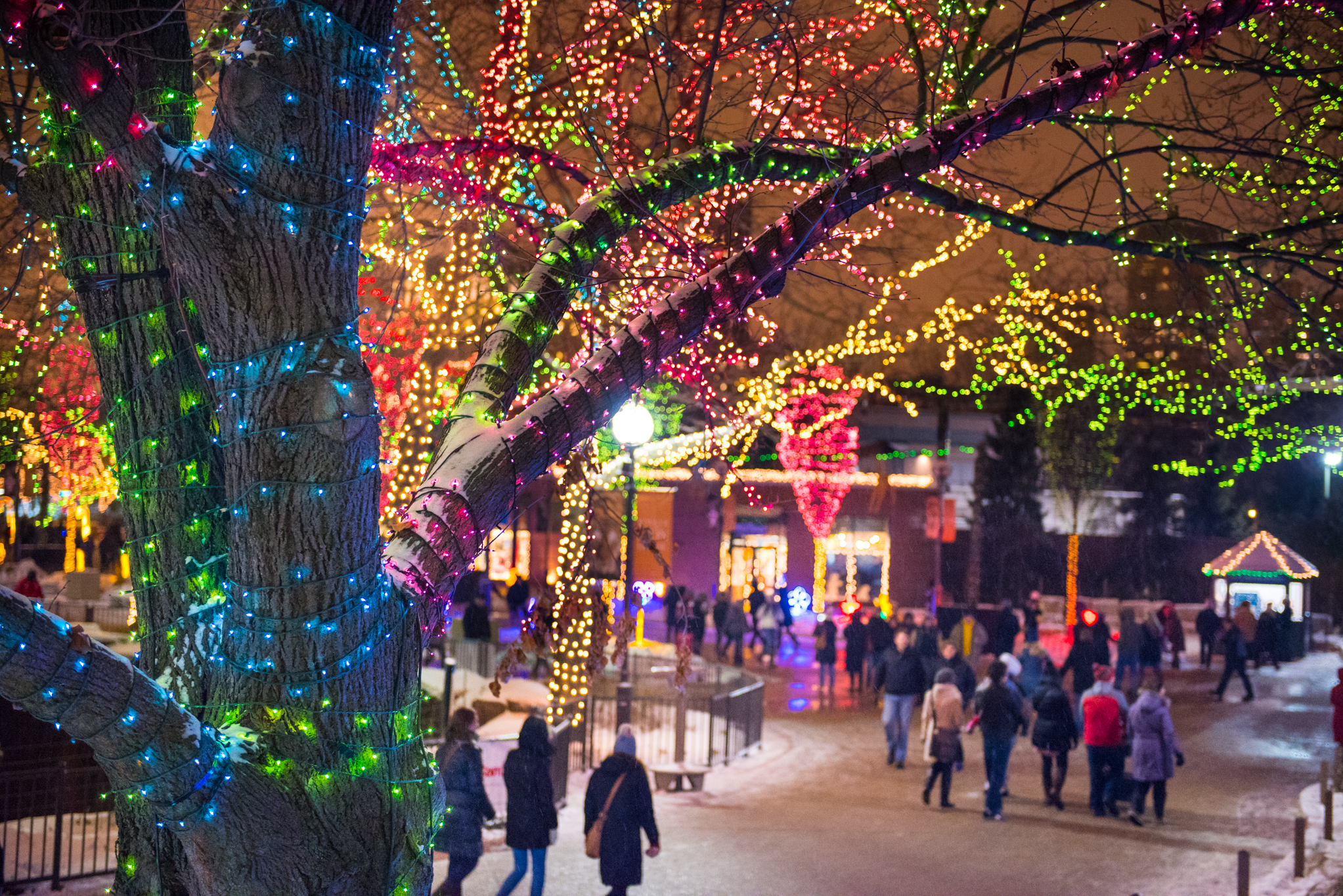 Where to see spectacular Christmas lights in Chicago