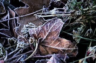 Frost in Newbury Park, California