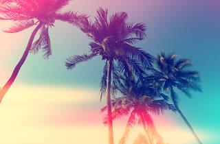 10 awesome Miami Instagram accounts to follow