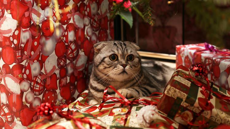 Gat i Nadal