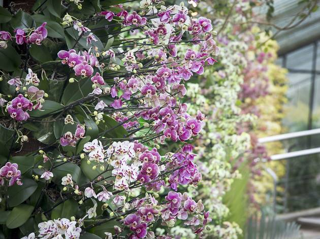 'Orchids Lates' at Kew Gardens