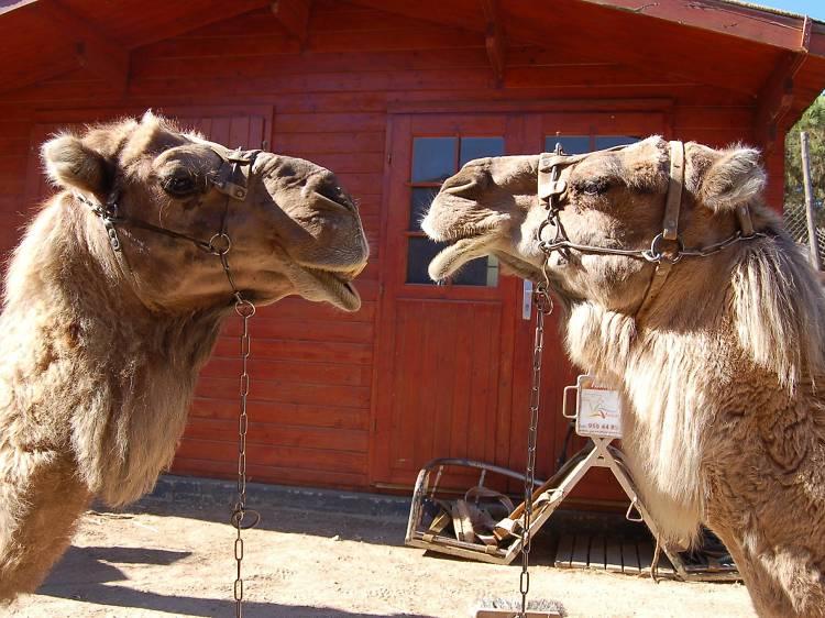 Huelva: Un passeig a Camell pel Parc de Doñana