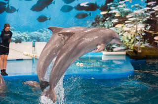 Sense nou delfinari... i sense dofins al Zoo de Barcelona!