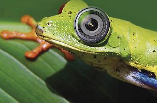 Conruso de Fotografía Biodiversidad y cambio climático