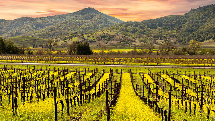 The ultimate guide to Napa