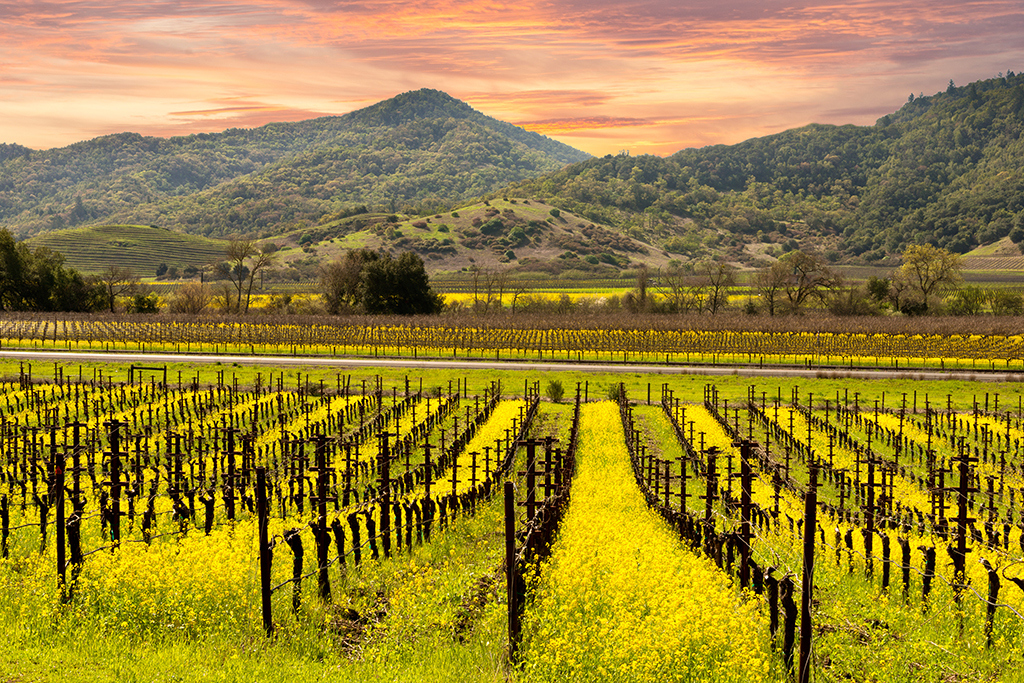 Wine Country Trekking in Napa Valley