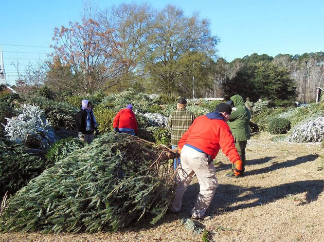 Recycle your Christmas tree at these Chicago Park District sites
