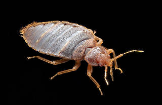 NYC is one of the most bedbug-infested cities in the country