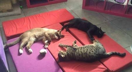 Para llevar a un amante de los gatos