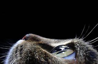 smith cat