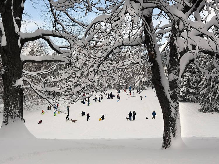 Cedar Hill, Central Park