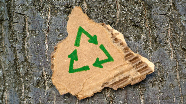 Recicla tu árbol