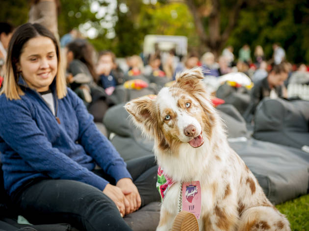 Dog and audience at Moonlight Cinema