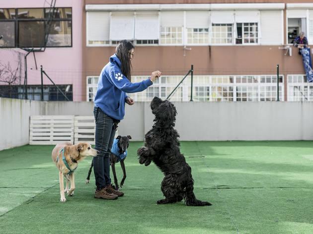 Mestre patas (Fotografia: Arlindo Camacho)