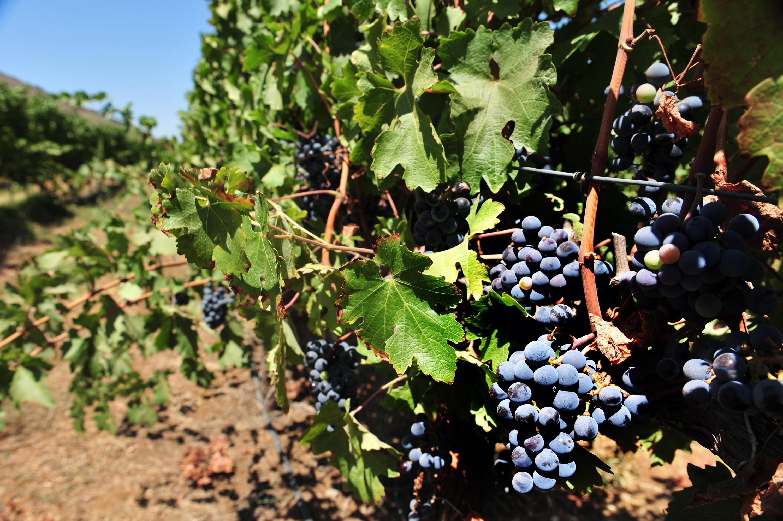 La carte des vins en Israël
