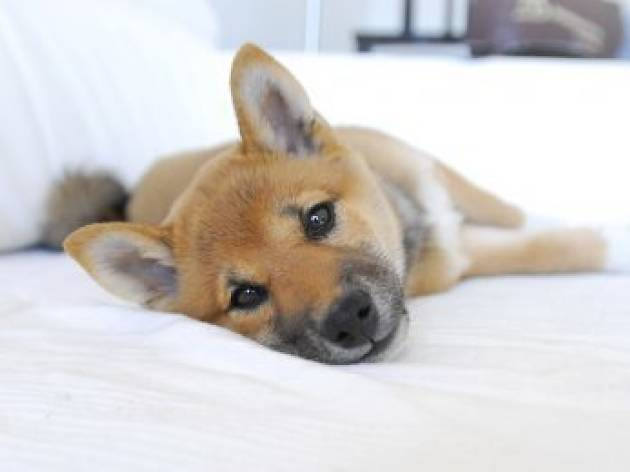 L.A.'s best pet-friendly hotels