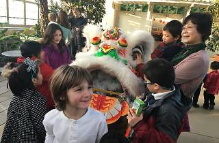 Chinese New Year Celebration at Garfield Park Conservatory
