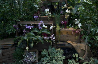 Orchid Festival