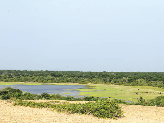 Bundala Bird Sanctuary