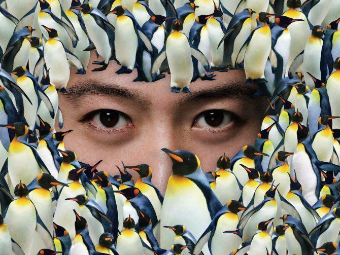 Leon's Penguins In Live