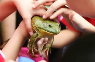 Jurong Frog Farm