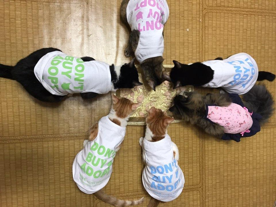 유주연, 고양이 쉼터 '나비야 사랑해' 설립자 2