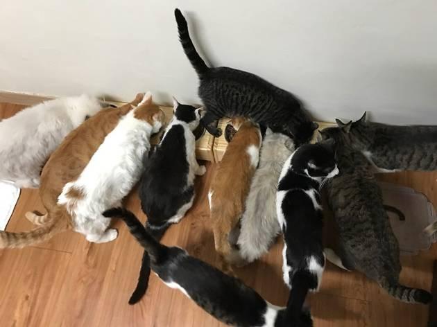 유주연, 고양이 쉼터 '나비야 사랑해' 설립자 3
