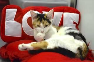 Regalos de San Valentín para mascotas